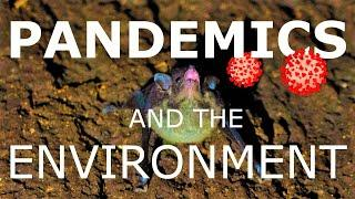 Conservation and Human Health: How destroying the environment leads to ZOONOSIS and PANDEMICS