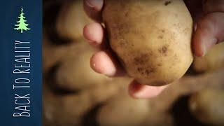 Storing Potatoes All Winter (Final Results: Mini Root Cellar Experiment)