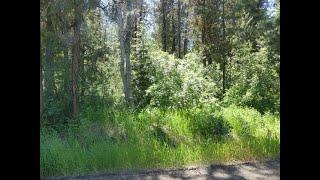 Land For Sale: TBD Boydstun Lane,  McCall, ID 83638 | CENTURY 21