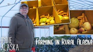 Running the largest commercial farm in rural Alaska | INDIE ALASKA