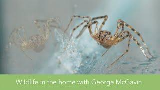 Wildlife in the home with George McGavin: SPIDERS