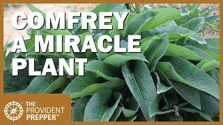 How to Propagate, Grow and Use Comfrey