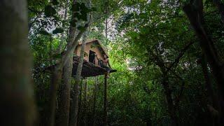 Incredible Build! Amazing Survival Tree House built in Tropical Rain Forest by Ancient Skills