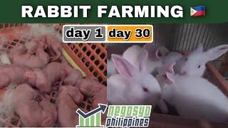 1 TO 30 DAYS OLD BABY RABBITS (Rabbit Farming) | Negosyo Philippines