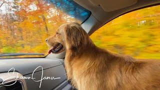 Fall Road Trips with My Wife and Dog